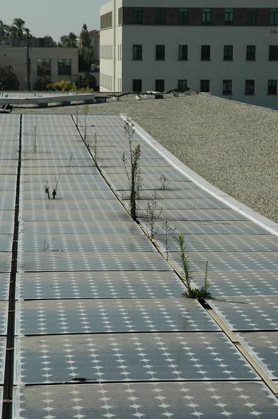 More SDSU Solar