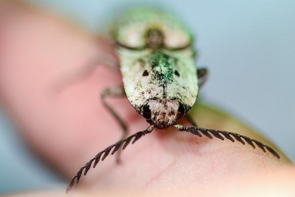 Cuba Entomology Field Research: Zapata