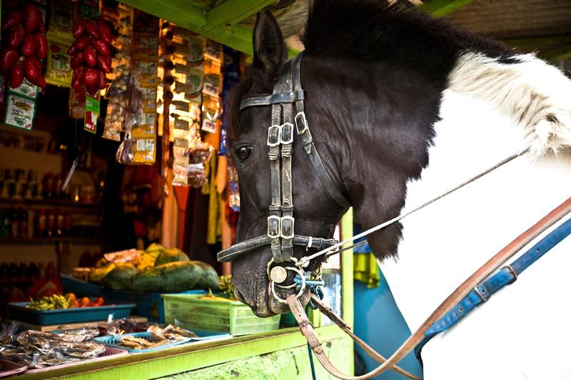 516 Shopaholic Horse.jpg