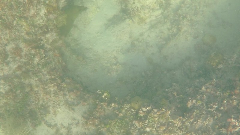 Snorkle with Fury Island Adventure, Key West, FL - Dec. 15, 2019-GOPR1866-017.mp4
