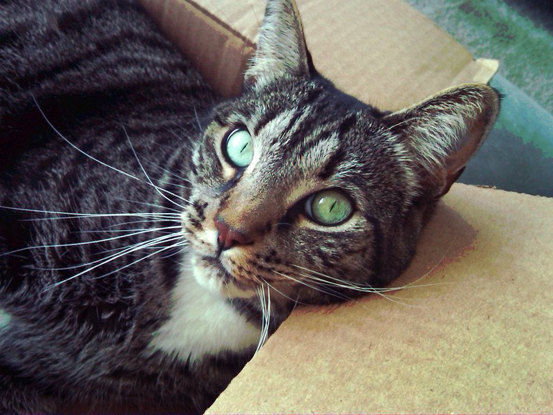 Cat in a Box 1.jpg