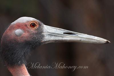 Birds of Prey, Idaho