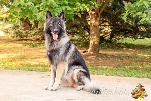 Fianna Canine