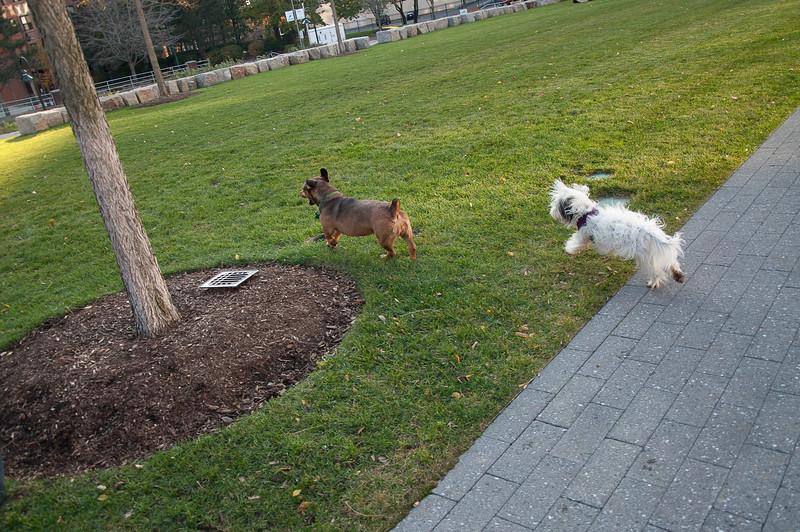 dog run27.jpg