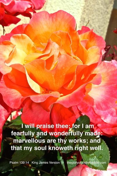Psalm 139-14 g .JPG