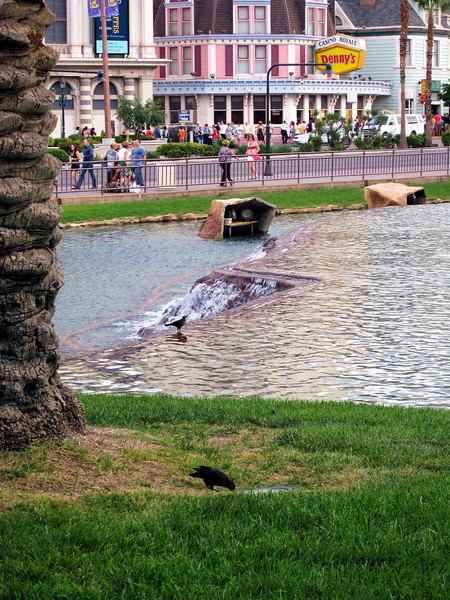 locals enjoy the Mirage fountain.jpg