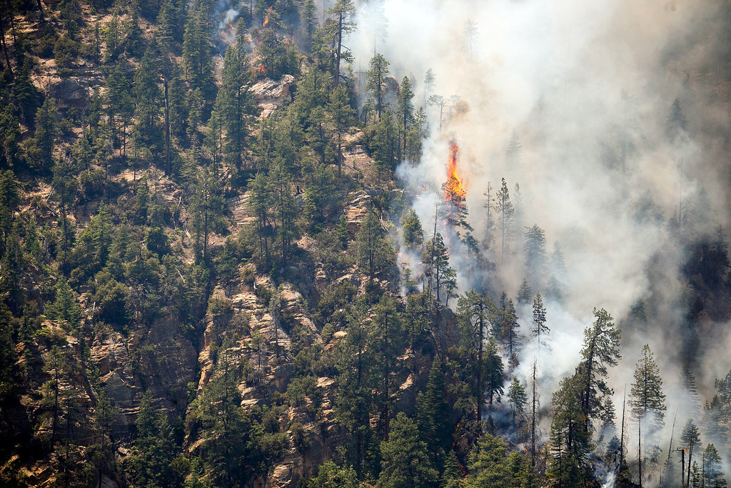. A tree burns out at the Slide Fire in Sterling Canyon at the Oak Creek Overlook above Sedona, Ariz., on Thursday, May 22, 2014. Hundreds of firefighters worked Thursday to protect communities on the edge of Flagstaff from a wildfire that is chewing up a scenic Arizona canyon with towering flames and burning entire trees down to nothing but ash. (AP Photo/The Arizona Republic, Michael Schennum)