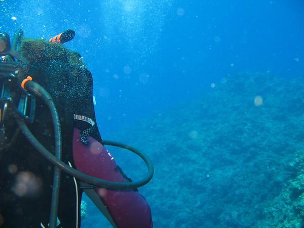 Toilet Bowl Horseshoe Dive