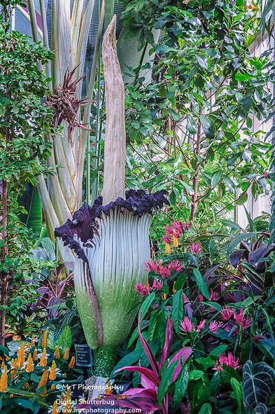 20131202_winter_gardens_0009-Edit.jpg