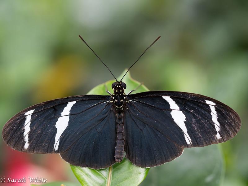 140503_ButterflyHouse_291.jpg