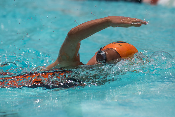 TigerSharks Swim Meet 2016
