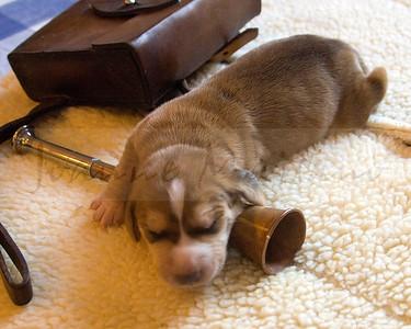 Snickersville Pups day 7