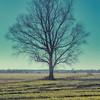 TreeHickory-003