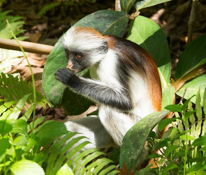 Tanzania_2D4A6590-Edit.jpg