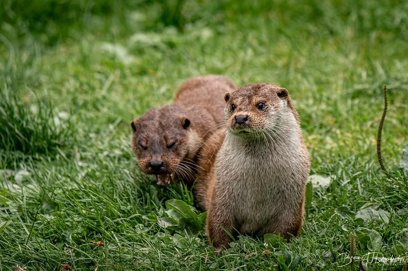 British Wildlife Centre_D850-0093.jpg