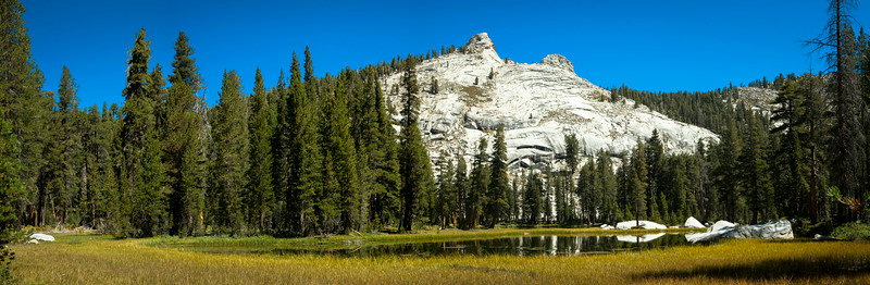 20140825_sequoia_0179-Edit.jpg