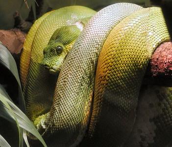 Woodland Park Zoo - Seattle