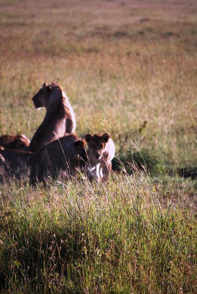 Serengeti (108).JPG