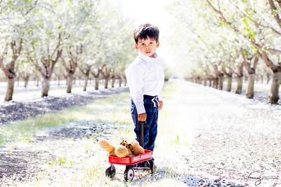 Swarna Orchard