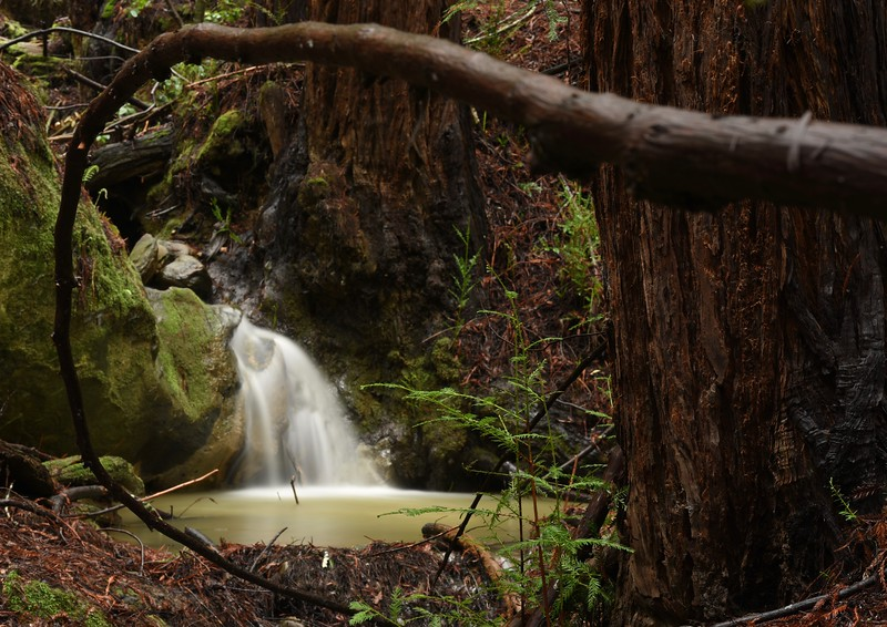 A waterfall flows along the Bridle Trail at Thornewood.