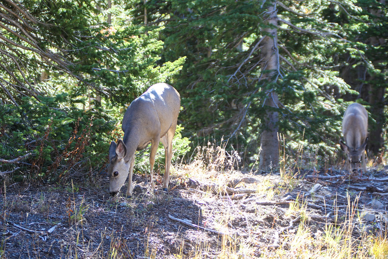 Fall Trip Wyoming & Montana 2016 (60 of 193).jpg