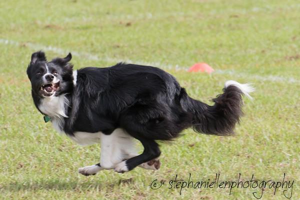 _MG_2384Up_dog_International_2016_StephaniellenPhotography.jpg