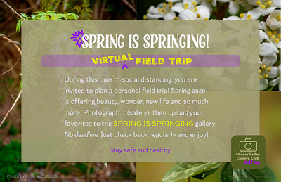 Spring is Springing Virtual Field Trip 2020