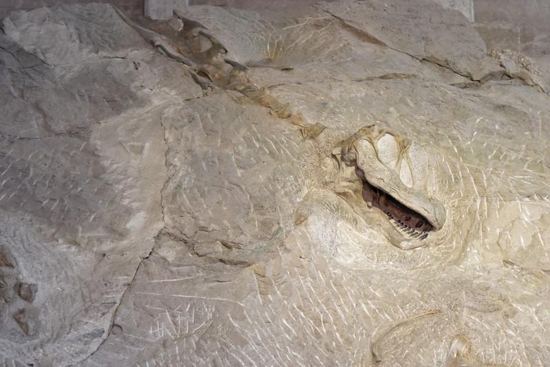 Sources chaudes et dinosaures