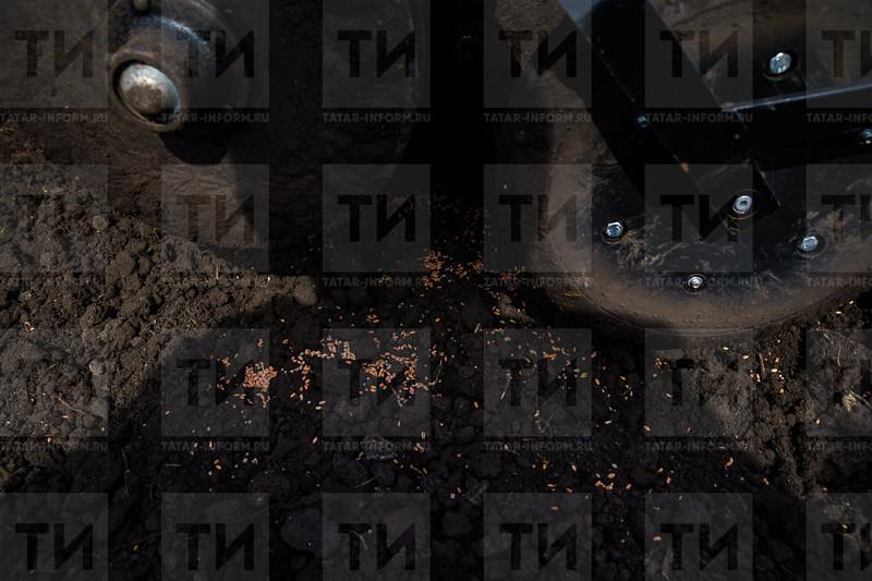 19.04.2021 - Буа районында бөртекле культураларны чәчүдән фоторепортаж (Фото Салават Камалетдинов )