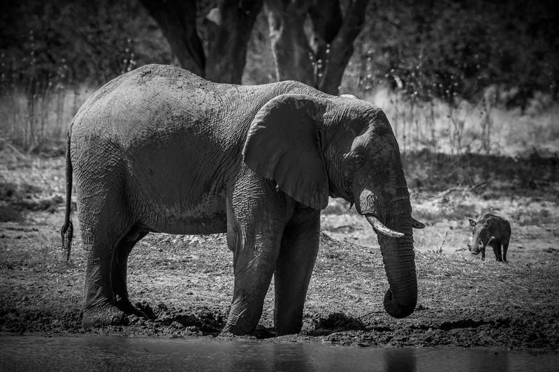 Botswana_June_2017 (1806 of 6179).jpg