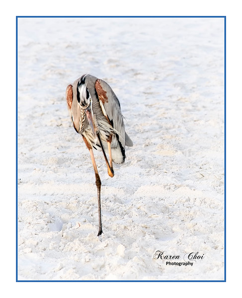 Heron on one leg sm.jpg