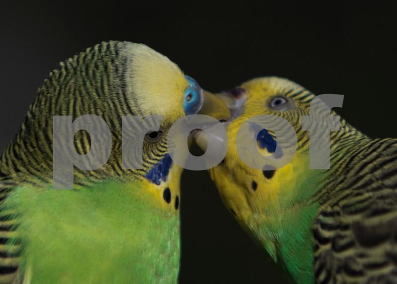 birds 6.jpg