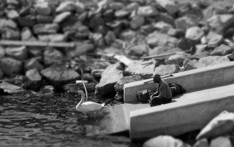 Swan, State Pier