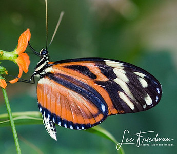 Butterflies, Bees and Insects