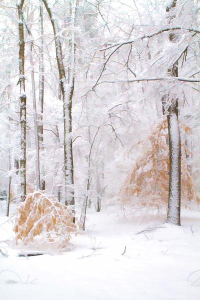 Smithville Snow Trails-242.jpg