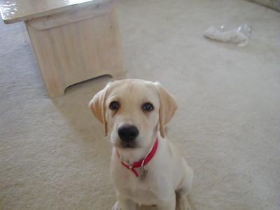 2001-07-01 Eddie Puppy