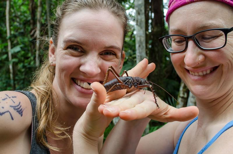Bug Chicks Amazon.jpg
