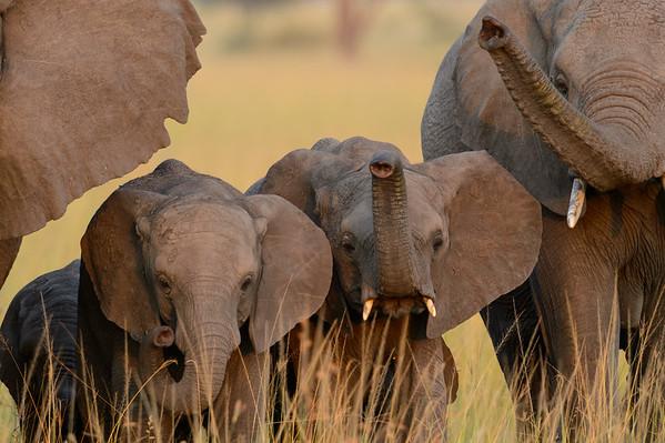Grumeti Serengeti