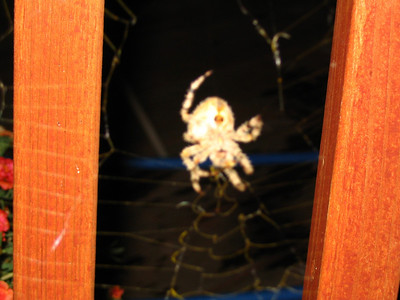 our scary spider