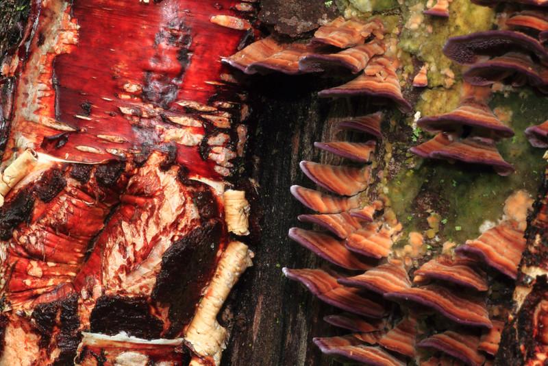 Bark & Mushrooms- Sherburne NWR