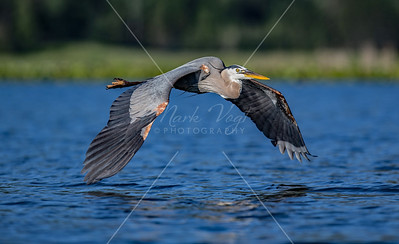 Herons and Cranes