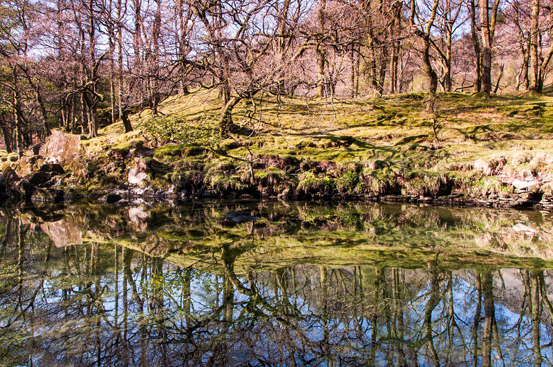 Tree reflections in the River Derwent