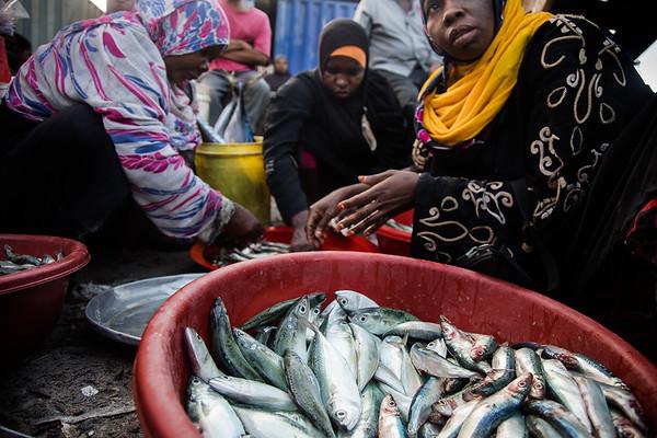 local fish market at the old dhow harbor, Zanzibar City
