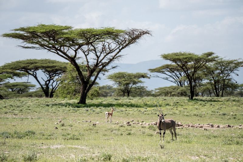 Samburu (42 of 70).jpg