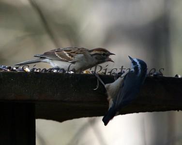 Get off my feeder!!!