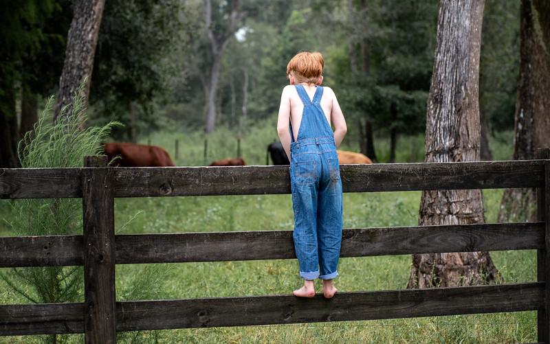 Anderson Lochlan sin cows.jpg