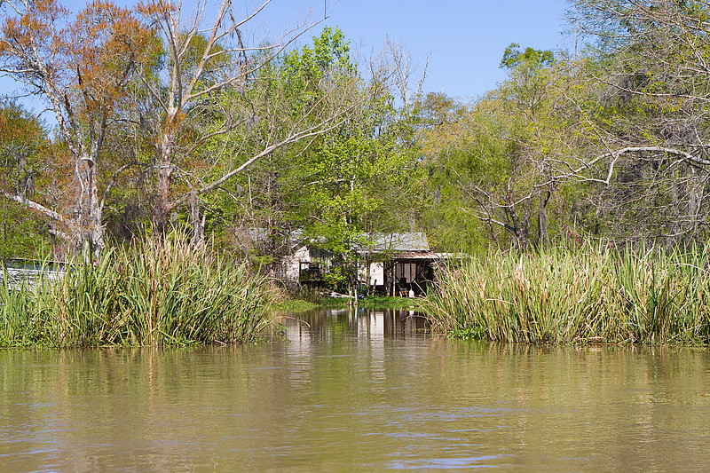 Louisianna Swamp 3.jpg