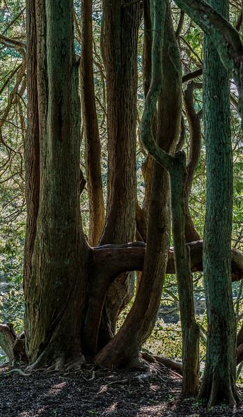 spooky-wood_21_20141019_1990339286.jpg