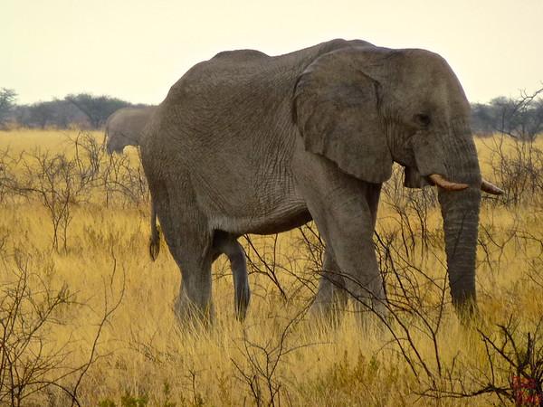 Spotting elephant in Etosha National Park, Namibia 4
