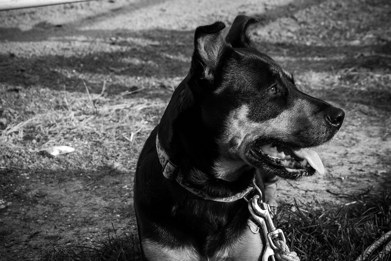 Stephanie Runion doggie-4.jpg